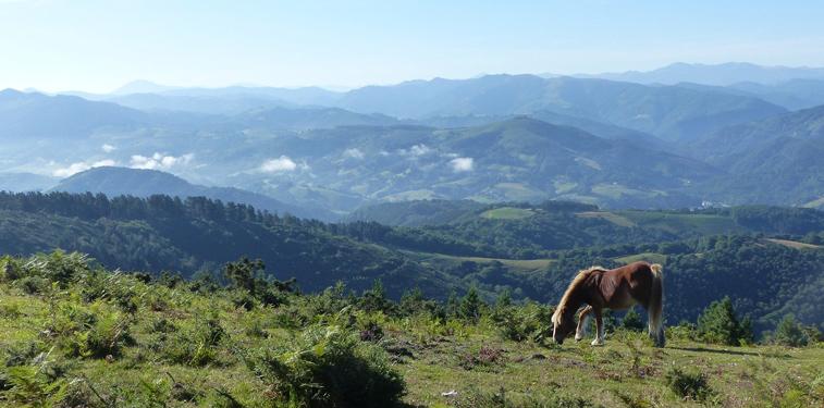 Promenades à cheval autour du camping